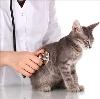 Ветеринарные клиники в Кусе